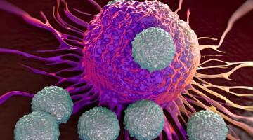 Настоящее и будущее гормональной терапии  рака предстательной железы