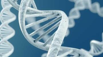 Генетики обнаружили гены-мишени для таргетной терапии РМЖ