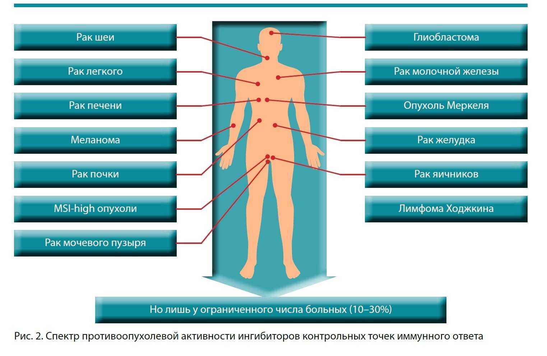 Спектр противоопухолевой активности ингибиторов контрольных точек иммунного ответа